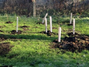 16jan18_our_justplanted_hedge_bridkfield