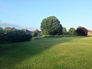 grass trees blue sky