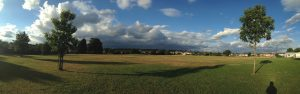 pan view with grass silhouetted trees n sky