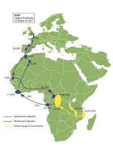 migration path over Spain, Morocco, West Africa to Tanazania