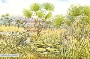 coloured drawing of stemless palms reeds and lillies