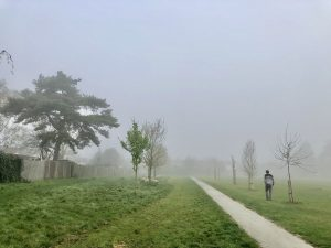 misty view of path n trees