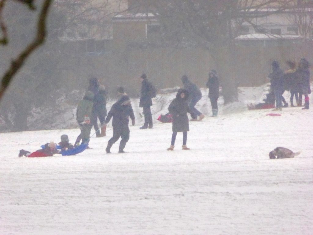 people sledging on Havelock Rec