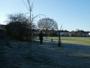 sun on frosty park